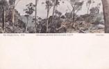 Australia Unused Postcard, Glen Rosa - World