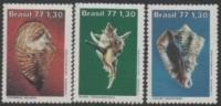 Brasil - 1977 Shells-Coquillages-Muscheln-Conchiglie (Strombus-Vasum-Murextenuivaricosus) ** - Brazilië