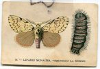 - 16 - Ancienne Chromo - LIPATIS MONACHA - Chicoré Bleu-Argent, ARLATTE & C°, Cambrai, BE, Scans. - Trade Cards
