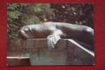 From ANIMALS OF AMERICA IN BRATISLAVA ZOO Set.  Earless Seal. 1970s Postcard - Non Classificati