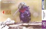 Nº 377 TARJETA DE URUGUAY DE EL PICAFLOR DE BARBIJO (PAJARO-BIRD) - Uruguay