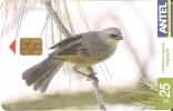 Nº 378 TARJETA DE URUGUAY DE EL TORDO MUSICO (PAJARO-BIRD) - Uruguay