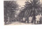 25270 Ajaccio Avenue 1er Premier Consul - 7 Tomasi - Bonaparte -- Napoleon Ier Palmier - Ajaccio