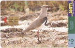 Nº 79 TARJETA DE UN PAJARO DE URUGUAY TERO (BIRD) - Uruguay