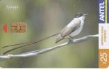 Nº 325 TARJETA DE URUGUAY DE LA TIJERETA (PAJARO-BIRD) - Uruguay