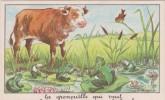 Fêtes : Illustrateur , La  Grenouille   Qui Veut... Que Le  Boeuf - Pasqua