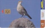 Nº 77 TARJETA DE URUGUAY DE ANTEL DE UN HORNERO (PAJARO-BIRD) - Uruguay