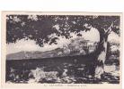 25281  CAP CORSE MORSIGLIA - LL 54 - France