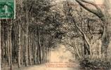 CPA  -  Sous Bois Dans Le Parc Du Chateau De PEPINVAST  (50)   à Madame La Comtesse  Le Marois - France