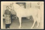 HORSE CAVALLI PFERDE CHEVAL OLD REAL PHOTO POSTCARD #101 - Pferde