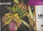 Page Coop Theme Banane - Zeitungen & Zeitschriften