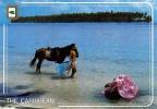 ANTIGUA Und BARBUDA (Antillen) - Schöne Junge Frau Oben Ohne Mit Pferd Im Meer, Gel.m.Sondermarke - Antigua Und Barbuda