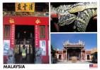 Pit Vipers, The Snake Temple, Penang, Malaysia - Yacine 26471 Unused, 17 X 12 Cm - Malaysia