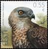 ESTONIA Estland 2015 Stamp Eagle (Pernis Apivorus) MNH - Estonia