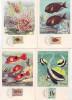 01 B 6 Cartes Poissons Moçambique Sur Support Publicitaire Médicament - Pescados Y Crustáceos