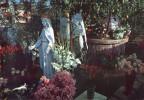 P3391 San Damiano di san Giorgio Piacentino (Piacenza) - Madonna delle Rose - madonne, virgin, vierge, religiosa