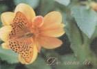Moldova  Moldavie  Moldawien  Moldau , 1996 , Butterfly , Flowers ; Pre-paid Postcard - Moldova