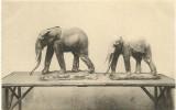 Wereldtentoonstelling GENT 1913 Belgisch Congo  Koloniale Landbouw Propaganda - Exposiciones