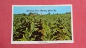 - Kentucky> Bowling Green  Field Of Tobacco   2086 - Bowling Green