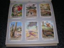 INSECTES ORTHOPTERES Mante Religieuse Sauterelle Criquet Liebig  Série Complète De 6 Chromos Trading Cards Chromo - Liebig
