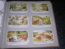 BATRACIENS TYPIQUES Grenouille Rainette  Liebig  Série Complète De 6 Chromos Trading Cards Chromo - Liebig