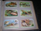 LES CEPHALOPODES Pieuvre Ammonites Nautile Calmar  Série Complète De 6 Chromos Trading Cards Chromo - Liebig
