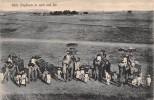 "02959 ""STATE ELEPHANT IN RANK AND FILE"" ANIMATA, ELEFANTI, TRUPPA. CART. SPED. 1911 DA BOMBAY - India"