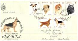 (900)  Bermuda FDC Cover - 1992 Dogs - Bermuda
