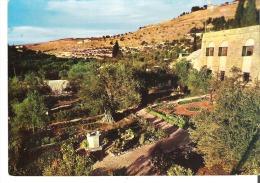 Garden Of Gethsemani  Jerusalem   Jordan - Jordan