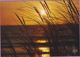 photo �� Ajoncs et soleil atlantique �� NEUVE non �crite