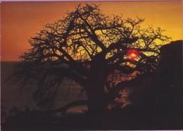 photo �� Le baobab symbolique va s'endormir �crite non dat�e.