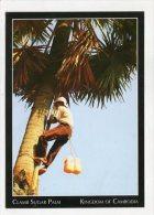 CAMBODIA - AK 249793 Climb Sugar Palm - Cambodja