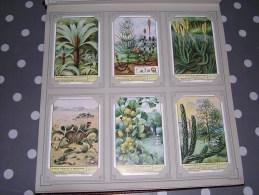 PLANTES ISSUES DE LA PREHISTOIRE  Série Complète De 6 Chromos Trading Cards Chromo - Liebig