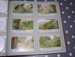 LES PARASITES DES CULTURES  Insectes  Série Complète De 6 Chromos Trading Cards Chromo - Liebig