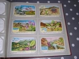PLANTES PEU CONNUES  Série Complète De 6 Chromos Trading Cards Chromo - Liebig