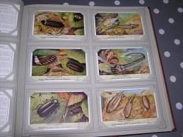 ANIMAUX LUMINEUX  Série Complète De 6 Chromos Trading Cards Chromo - Liebig