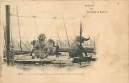 V-15 - 747 : CIRQUE BARNUM ET BAILEY  LES ELEPHANTS - Elephants