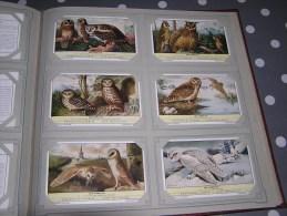 LES HIBOUS Oiseau Birds Oiseaux Chouette Chevêche Harfang   Série Complète De 6 Chromos Trading Cards Chromo - Liebig