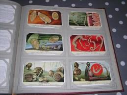 LA BILHARZIOSE  Série Complète De 6 Chromos Trading Cards Chromo - Liebig