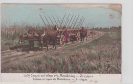 AK - MAZEDONISCHER Ochsenkarren Um 1900 - Europe