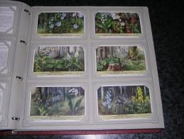 FLEURS DES BOIS Plantes Botanique   Liebig  Série Complète De 6 Chromos Trading Cards Chromo - Liebig