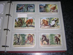 LES SINGES Animaux Capucin Gorille Gibbon Orang Outan  Liebig  Série Complète De 6 Chromos Trading Cards Chromo - Liebig