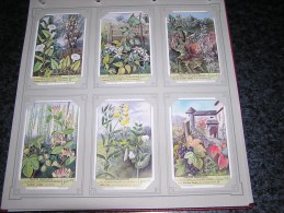 PLANTES GRIMPANTES Vigne Houblon Botanique Plante  Liebig  Série Complète De 6 Chromos Trading Cards Chromo - Liebig