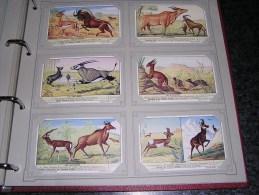 LES ANTILOPES Faune Animaux Afrique Gazelle Cob Sassi  Liebig  Série Complète De 6 Chromos Trading Cards Chromo - Liebig