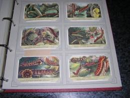LES CHENILLES  Liebig  Série Complète De 6 Chromos Trading Cards Chromo - Liebig