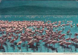 Kenia  East Afrika - Wildlife - Flamingo - 3x Nice Stamps - Kenia