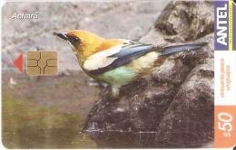 Nº 328 TARJETA DE URUGUAY DE EL ACHARA (PAJARO-BIRD) - Uruguay