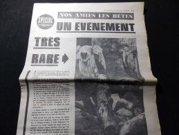 Coupure de presse Offre PROMO voir description Evenement tres rare Des Vautours  nid en captivit� Coucy les Eppes Oiseau