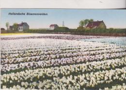 1929  HOLLANDSCHE BLOEMENVELDEN - Holanda