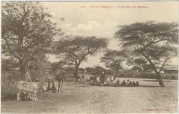 Afrique : Sénégal, Louga, Le Marché Aux Bestiaux - Senegal